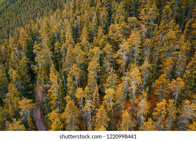 Forest of fall colors in Alberta, Canada