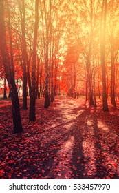 forest Falls Color Forest, Autumnal Park, Autumn Trees, Autumn background