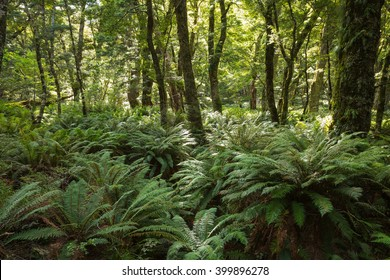 Forest ferns cover the rainforest on Routeburn Track, New Zealand