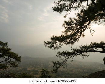 The forest is also fertile. Located at the top of the mountain.