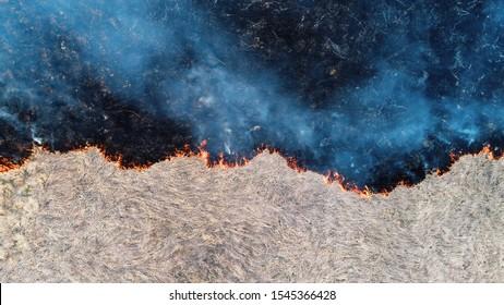Wald und Feldbrand. Trockenes Gras brennt, Naturkatastrophe. Luftbild. Nach dem Feuer ist der Boden mit einer schwarzen Schicht aus Brennen und Asche bedeckt. Vertikal nach unten anzeigen. Klare Trennlinie für den Brand.