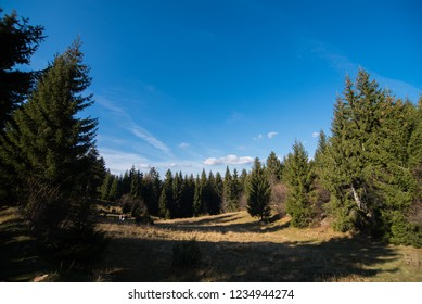 forest and field on sunny day