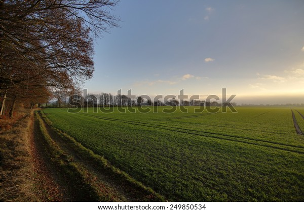 Forest and field with rising storm and fog in Mecklenburg-Vorpommern, Germany.