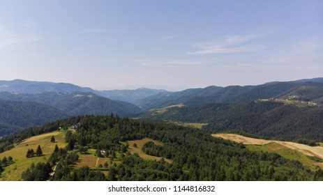 forest and fields