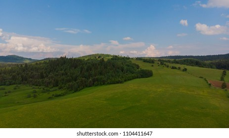 forest and fields on sunny day
