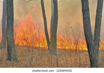 A forest fire.