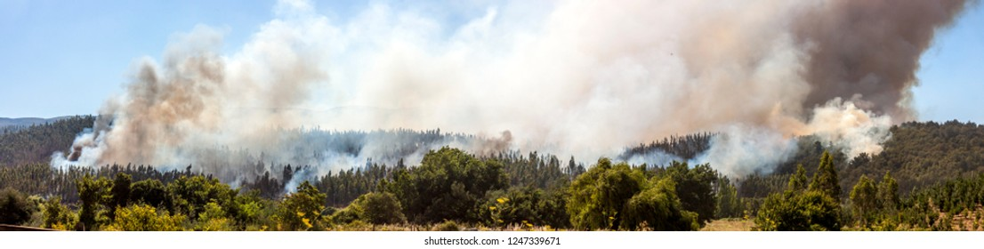 Forest Fire at Angol on 2014, Bio Bio Region, Chile.