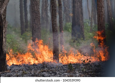 Forest fire. Burned trees after wildfire, pollution and a lot of smoke in Thailand on every March.