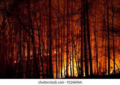 Forest Fire and Burning Trees