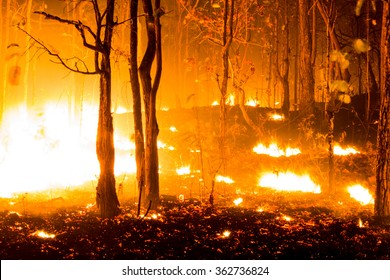 Forest fire burning, Wildfire closeup at night.