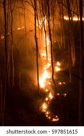 Forest fire burning, Wildfire and fire path closeup at night.
