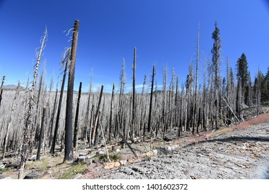 forest fire damage in Glassen NP