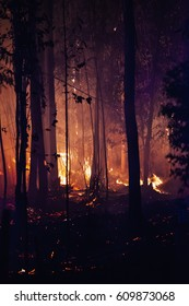 Forest fire at dusk detail