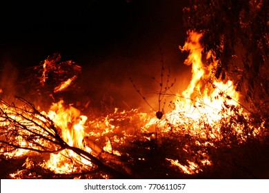 Forest fire. fallen tree is burnt on ground lot of smoke when vildfire. fire destroys everything Leaving only scorched tree and ashe. Forest burning is natural disaster. visualization of forest fires