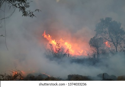 Forest fire with heavy smoke foreground in tropical forest in the evening. Cause of deforestation in developing country. Image