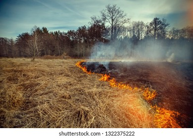 Forest fire in the meadow of the right bank of the river Uzh, Korostensky district, Ukraine