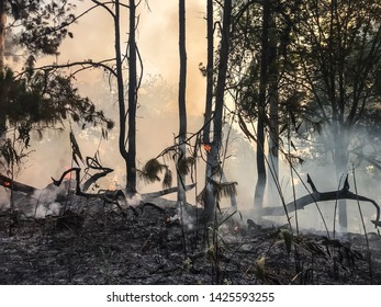 Forest fire occurred on March 21, 2019 in the morning at Doi Pha Hom Pok National Park, Fang District, Chiangmai province, northern of Thailand.