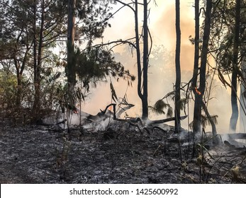 Forest fire occurred on March 21, 2019 in the morning at Doi Pha Hom Pok National Park, Fang District, Chiang Mai Province, northern of Thailand.