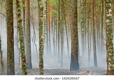 forest fire in the pine forest and smoke, burning moss
