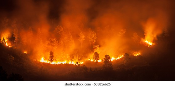 Forest fire, several hectares of pine trees burned during the dry season in June 2013 in Tele-Samosir Lake Toba (Danau Toba) North Sumatra (Sumatera Utara) Indonesia