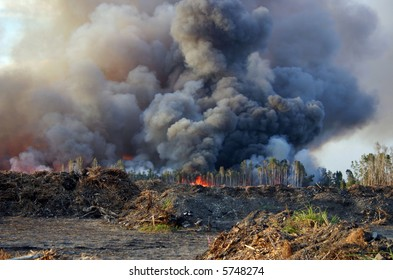Forest fire with thick black smoke.