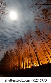 Forest Fire Under Full Moon