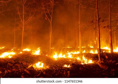 Forest fire, Wildfire burning tree in red and orange color at night in the forest at night,  North Thailand.