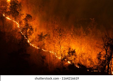 Forest fire, Wildfire burning tree in red and orange color at night in the forest on mountain, North Thailand, Soft focus.