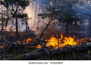 Forest Fire, Wildfire burning tree in red and orange color