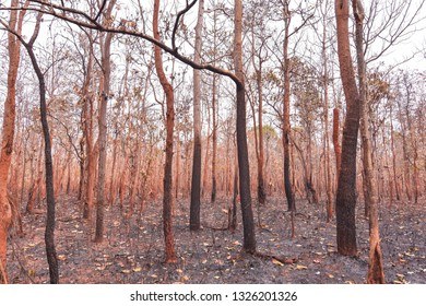 Forest fires, burning deciduous forests and mixed deciduous forests in Southeast Asia Greenhouse effect, global warming, drought Elniyo phenomenon