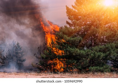 Forest fires and wind dry completely destroy the forest and steppe during a severe drought in southern Ukraine. The disaster brings regular damage to nature and the region