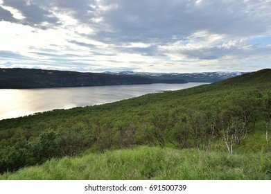 Forest and fjords in Norhern Norway