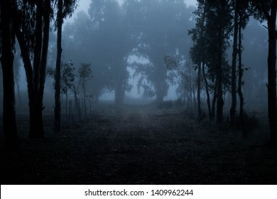 forest flooded by a slight fog