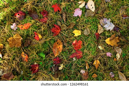 Forest floor background in autumn with leaves and pine cones