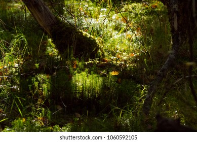 Forest floor with backlit sunlight in the Scottish Highlands
