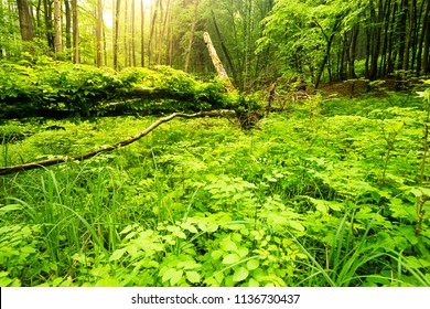 Forest floor with dense green plants