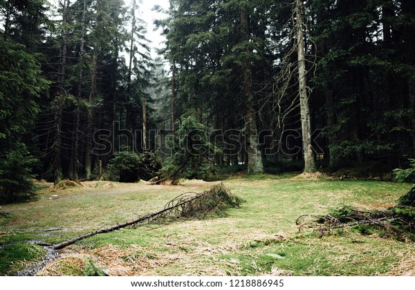 The forest floor in the dense upper Harz forest
