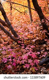 Forest Floor in the Fall Covered with Pink Leaves