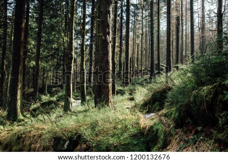 The forest floor in a fresh pine forest