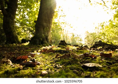 Forest Floor with Leaves
