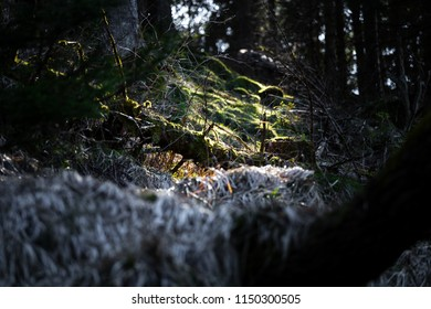 Forest floor with moss in the dark forest