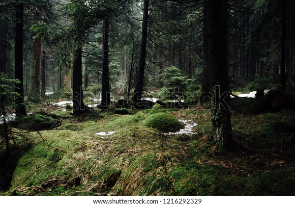 The forest floor in the thick of the Harz forest