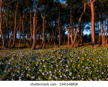 forest with flowers at spring in La Galea in Getxo