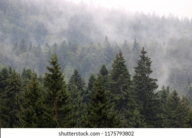 forest in the fog autumn season