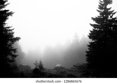 Forest and fog in black and white