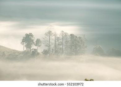 Forest with Fog at Chiangdao,Chiangmai,Thailand