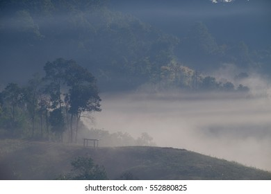 Forest and Fog at Chiangdao,Chiangmai,Thailand