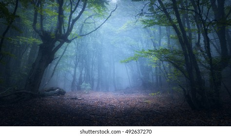 Forest in fog. Fall woods. Enchanted autumn forest in fog in the morning. Old Tree. Landscape with trees, colorful green and red foliage and blue fog. Nature background. Dark foggy forest