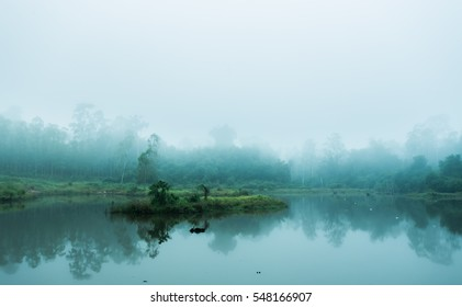 Forest and fog lake.