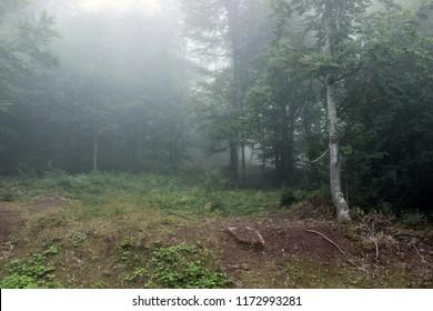 Forest fog mist green trees woods park